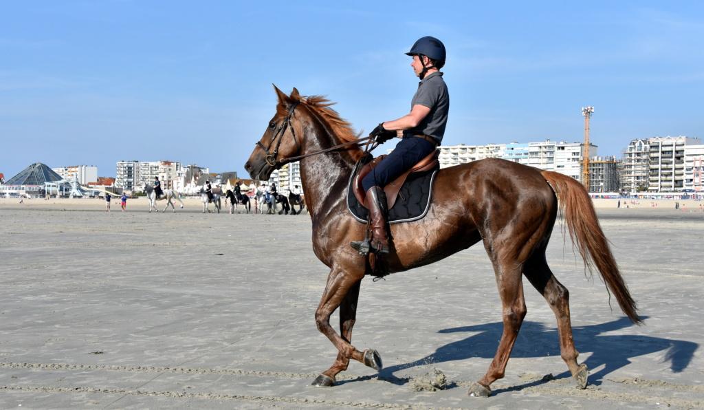 Cheval à la plage du Touquet Dsc_6410