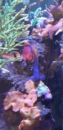 photos de poissons et coraux  - Page 2 20200110