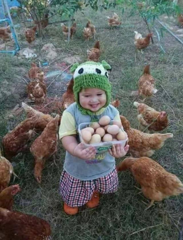 [Article] Société: plaidoyer pour les poules - Page 5 7b249510
