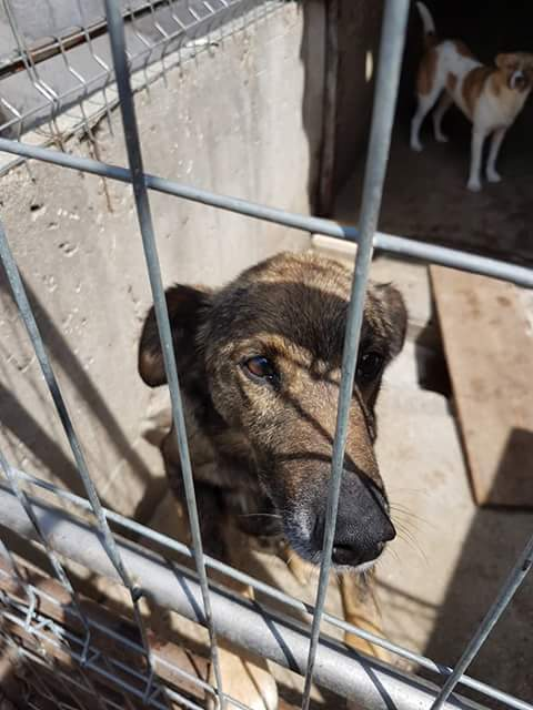 YANOU, M-X, Né 2012, 12 kg (ORASTIE/RUE) - Son maitre voulait le tuer - A disparu - Fb_im324