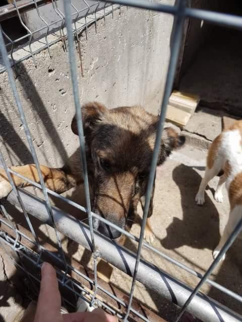 YANOU, M-X, Né 2012, 12 kg (ORASTIE/RUE) - Son maitre voulait le tuer - A disparu - Fb_im325