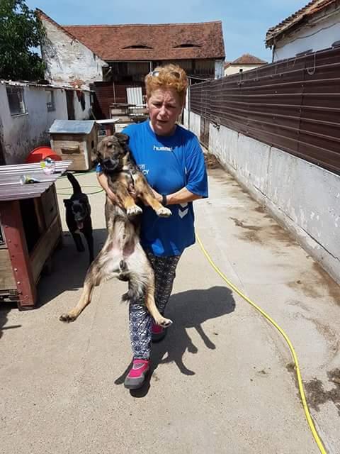 YANOU, M-X, Né 2012, 12 kg (ORASTIE/RUE) - Son maitre voulait le tuer - A disparu - Fb_im327