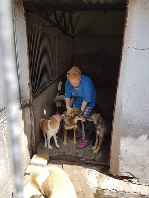 YANOU, M-X, Né 2012, 12 kg (ORASTIE/RUE) - Son maitre voulait le tuer - A disparu - Fb_im328