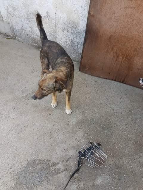 YANOU, M-X, Né 2012, 12 kg (ORASTIE/RUE) - Son maitre voulait le tuer - A disparu - Fb_img27