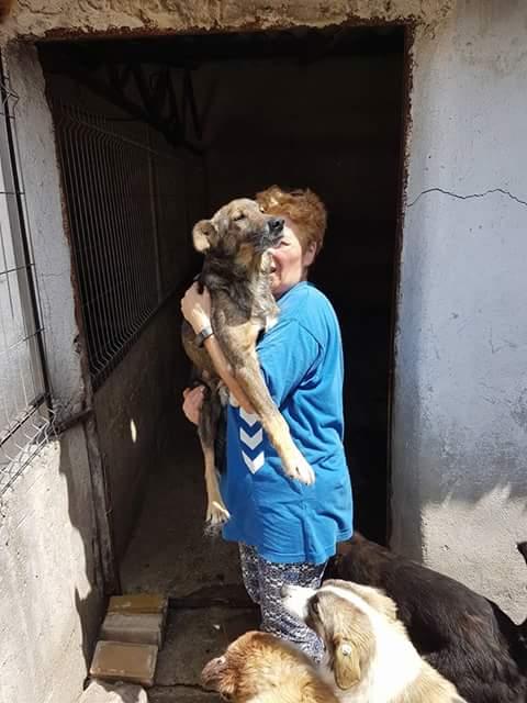 YANOU, M-X, Né 2012, 12 kg (ORASTIE/RUE) - Son maitre voulait le tuer - A disparu - Fb_img29