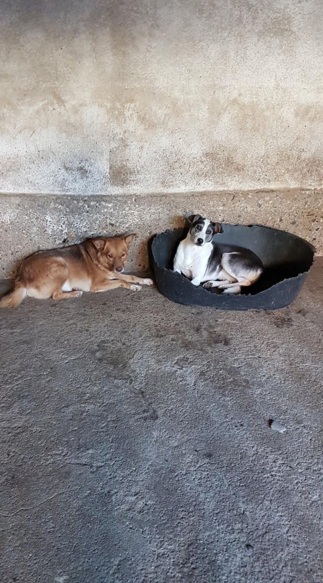 SOURY F-X, Née 2014 taille moyen 12 KG (ORASTIE/RUE)- Une très jolie chienne timide - - Page 2 Rece2450