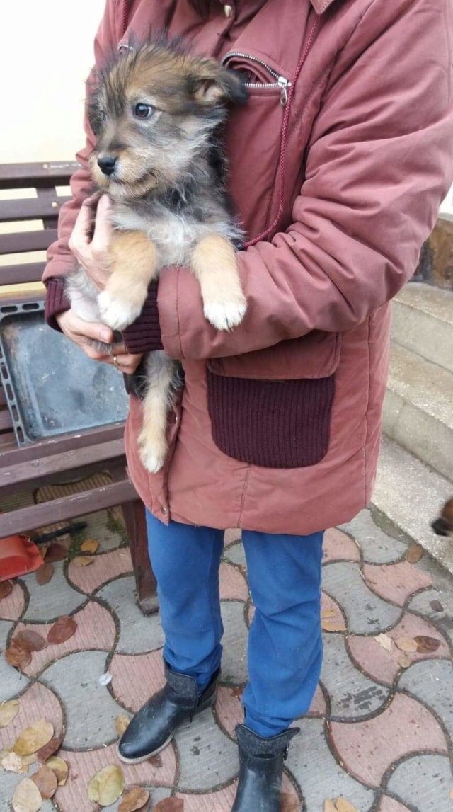 JONNY2, M-X, né 10/2018 (ORASTIE/RUE) Adopté via la SPA de PONTARLIER Rece3727