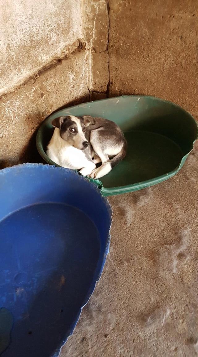 SOURY F-X, Née 2014 taille moyen 12 KG (ORASTIE/RUE)- Une très jolie chienne timide - - Page 2 Recei844
