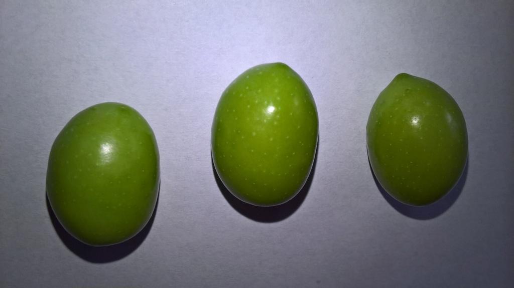 ¿Qué variedad son estos olivos? (Croacia) Wp_20146