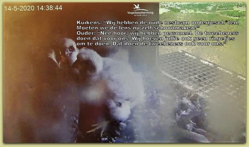 Afbeeldingen De Mortel 2020 vanaf 22 april. Pip /eerste kuiken - Pagina 19 Dsc01113