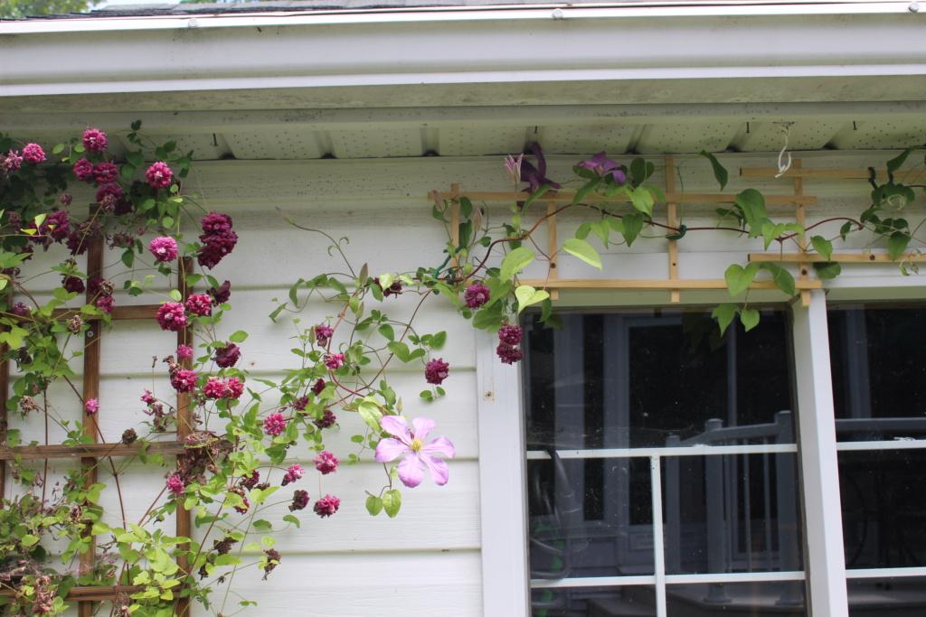 Mme de Bouchaud en fleurs ! Img_1410