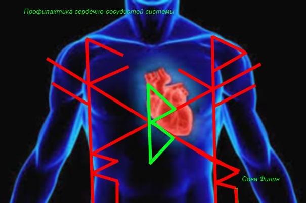 "Став ""профилактика лечения сердечно-сосудистой системы"" от Сова Филин 11119"