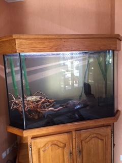 l'aquarium est arrivé ! Img_0110