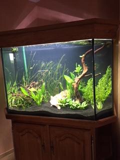 l'aquarium est arrivé ! - Page 2 Img_0211