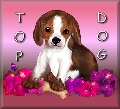 Top Dog - Page 3 8_7_2011