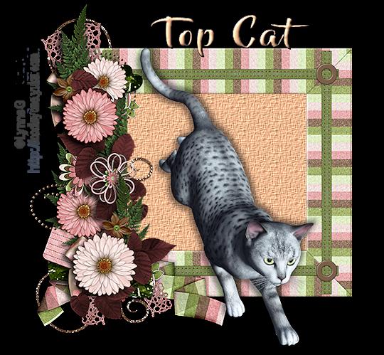 Top Cat Topcat11