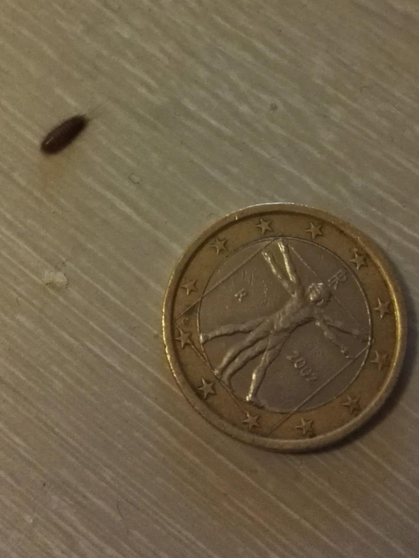 Savez-vous quel est cet insecte svp ? Img_2010