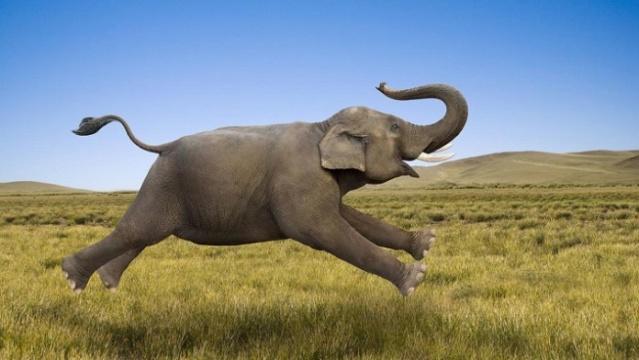 Une mémoire d'éléphant Elepha10