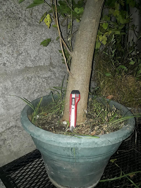 Los pre-bonsai 13-mor10