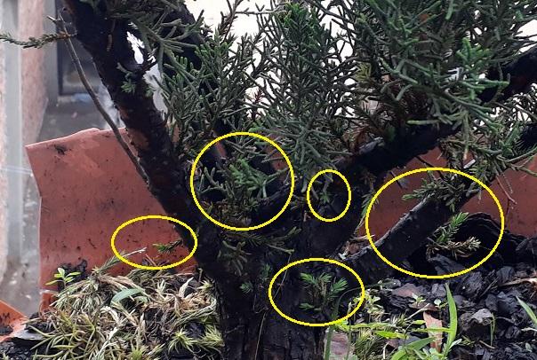 Los pre-bonsai 56-jun10