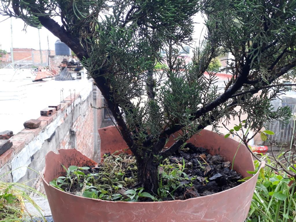 Los pre-bonsai 56-jun11