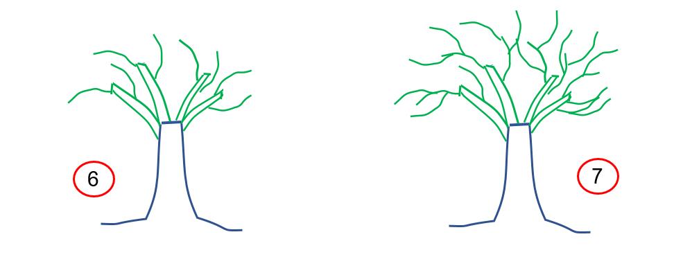 Los pre-bonsai 67-tec10