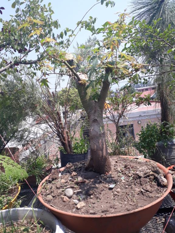 Los pre-bonsai 74-ent10