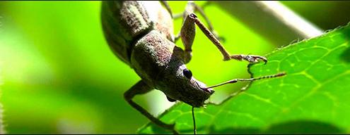 Que plaga es? Insect10