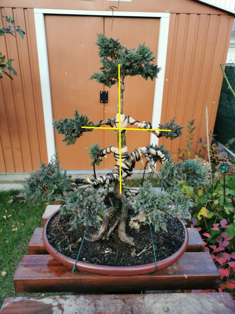 Remodelación Juniperus Chinensis sobre Piedra  Junipe14