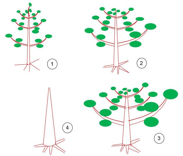 Los pre-bonsai Vertic12