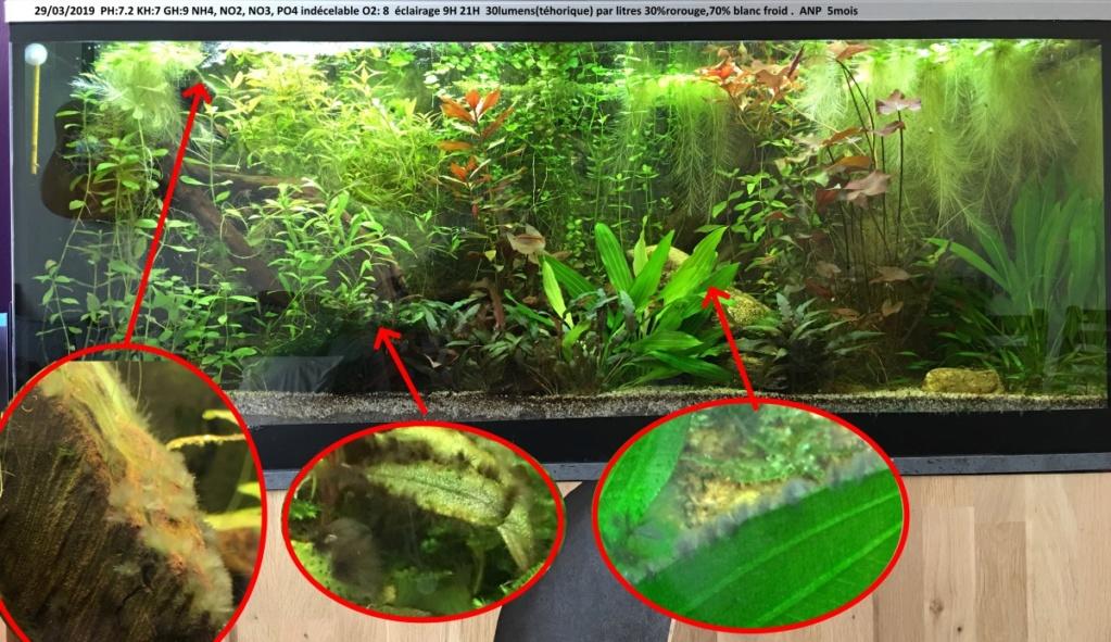 identification des algues Aquari12