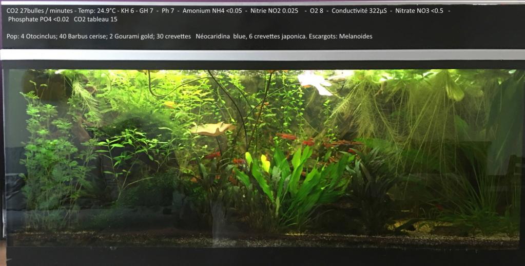 1ere tentative 240l sans filtre - Page 4 Aquari20