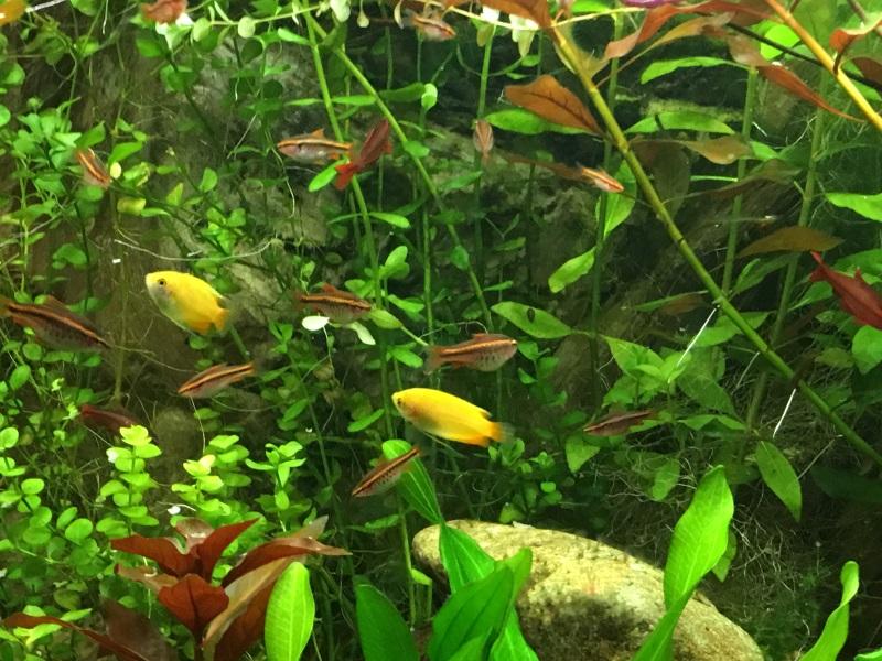 identification des algues Chuna_11