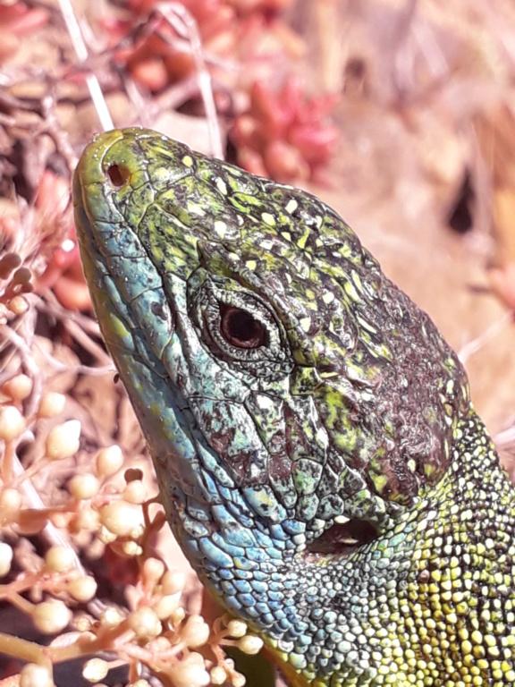 lézards et autres reptiles - Page 7 20190785