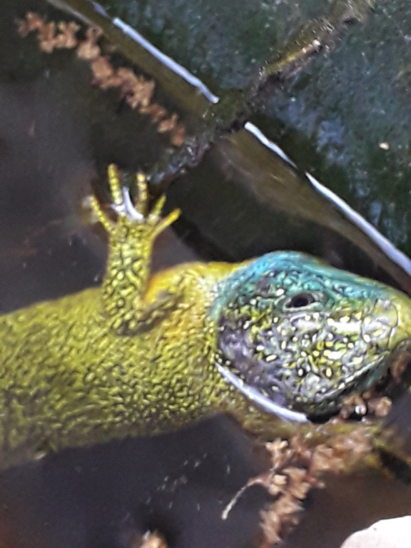 lézards et autres reptiles - Page 7 20190793