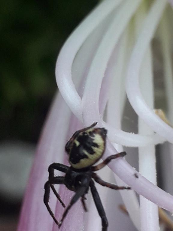 les 8 pattes - araignées et compagnie - Page 24 20190958