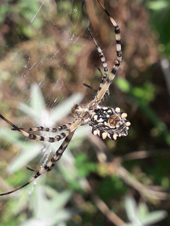 les 8 pattes - araignées et compagnie - Page 24 20191019