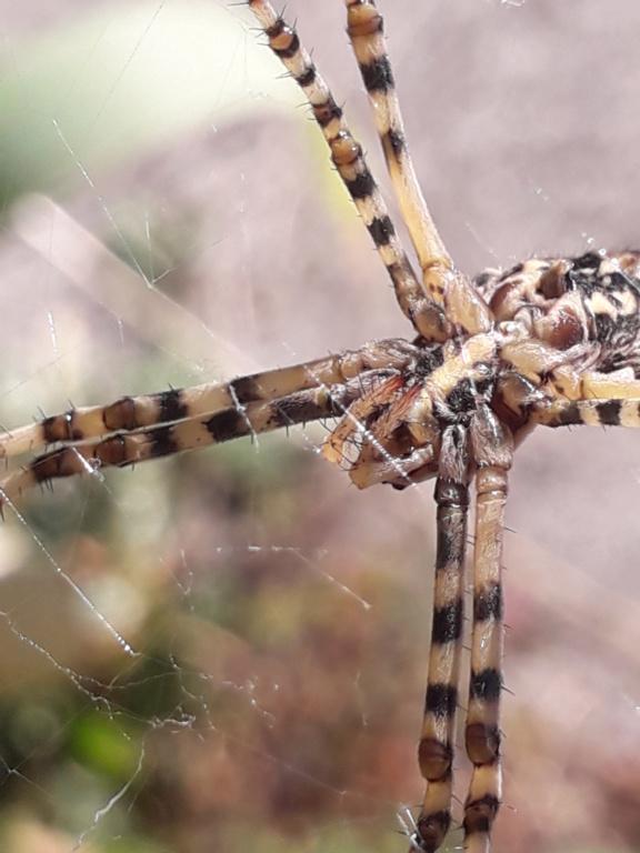 les 8 pattes - araignées et compagnie - Page 24 20191021