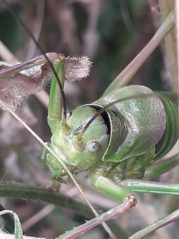 """Déficoncours """"Les insectes sur les plantes"""" - les participations - Page 3 20200938"""