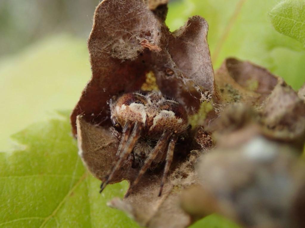 les 8 pattes - araignées et compagnie - Page 25 Img-2136