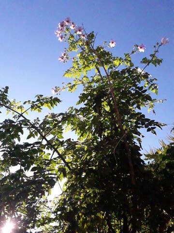 Dahlia imperialis - Page 9 20191220