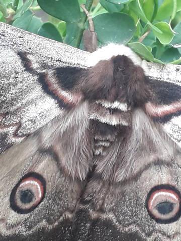 fil(et) à papillons - Page 16 20200757