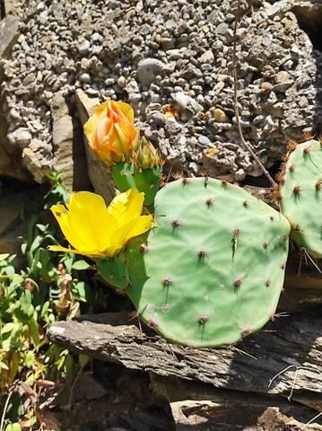 Cactus - Floraisons 2021 Img_2245