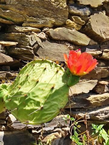 Cactus - Floraisons 2021 Img_2246