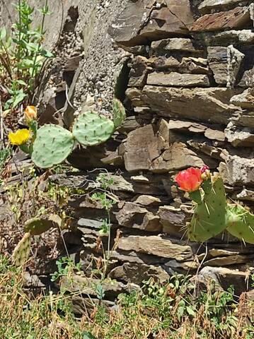 Cactus - Floraisons 2021 Img_2248