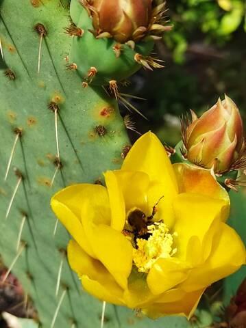 Cactus - Floraisons 2021 Img_2283