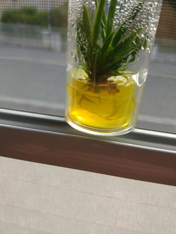 Orchidee einpflanzen Img_2010