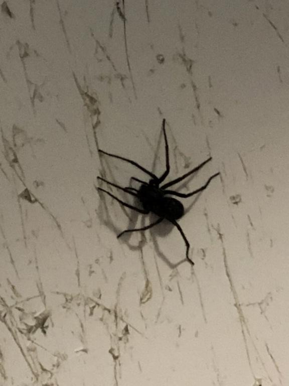 Connaissez vous cette araignée 451f1d10