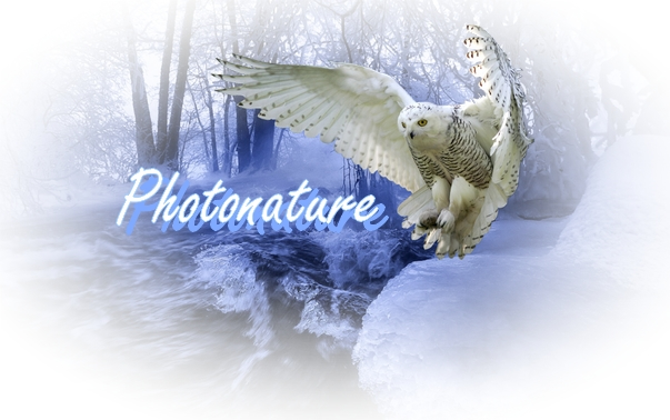 photonature