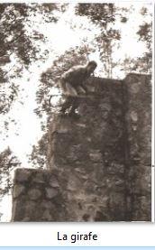 Le 2eme RPIMa dans sa Ville Girafe10